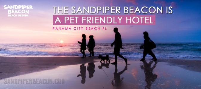 Pet Friendly Hotels in Panama City Beach - Sandpiper Beacon